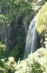 Tamborine Mountain National Park, Waterfall, Bushwalking, Lookout