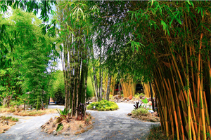 Bamboo Downunder, A growing attraction, maze, family fun